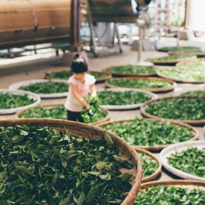 Десять самых популярных сортов китайского чая